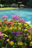 Outdoor swimming pool on a hot Summers day. Flowers beside an outside leisure pool during a hot Summers day Stock Photography