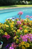Outdoor swimming pool on a hot Summers day. Flowers beside an outside leisure pool during a hot Summers day Royalty Free Stock Photos