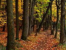 Outdoor Traking - Forest Path - Fall Scene royalty free stock photo