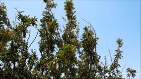 Outdoor tree stock video
