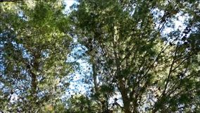 Outdoor tree. In the mountains stock footage