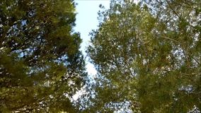 Outdoor tree. In the mountains stock video footage