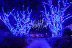 Outdoor Trees Holiday Lights Stock Image