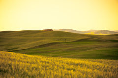 Outdoor Tuscan gold hills landscape at sunset Stock Photo