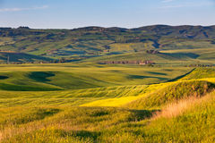 Outdoor Tuscan gold hills landscape at sunset Stock Photos
