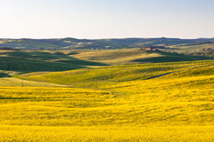 Outdoor Tuscan Val d Orcia green and yellow fields Stock Photography