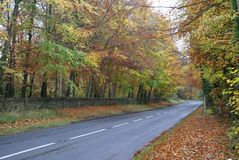 Outdoor view in Autumn Royalty Free Stock Photo