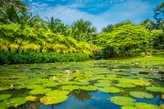 Outdoor view of a beautiful garden with an artificial lake with many Lily pads in the water located at Marina Bay Sands Royalty Free Stock Image
