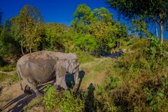 Outdoor view of huge Elephants walking after a taking a refreshing bath with mud in Jungle Sanctuary, Elephant spa. Enjoy bathing in Chang Mai, in Thailand royalty free stock images