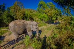 Outdoor view of huge Elephants walking after a taking a refreshing bath with mud in Jungle Sanctuary, Elephant spa. Enjoy bathing in Chang Mai, in Thailand stock photos