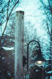 Outdoor view of light posts close to pine forest covered with snow in Norway.  Stock Photography