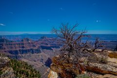 Outdoor view of old dry bush in the border of the cliffs above Bright Angel canyon, major tributary of the Grand Canyon. Arizona, view from the north rim, in royalty free stock photography
