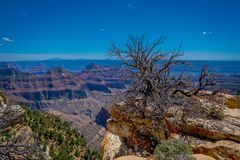 Outdoor view of old dry bush in the border of the cliffs above Bright Angel canyon, major tributary of the Grand Canyon. Arizona, view from the north rim, in stock photos