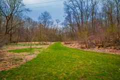 Outdoor view of path inside of the forest covered with green grass and some dry trees in Lancaster. County Pennsylvania Royalty Free Stock Photography