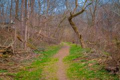 Outdoor view of path inside of the forest covered with green grass and some dry trees in Lancaster. County Pennsylvania Stock Photography