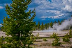 Outdoor view of some trees in the horizont with small geysers, hot springs, and vents of Norris Geyser Basin. Yellowstone National Park, Wyoming, USA Stock Photos