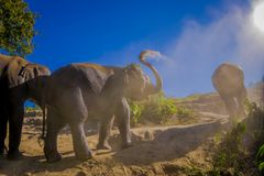 Outdoor view of young elephants walking near the riverbank in the nature, in Elephant jungle Sanctuary, during a. Gorgeous sunny day playing with dry clay after stock photo
