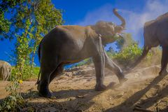 Outdoor view of young elephants walking near the riverbank in the nature, in Elephant jungle Sanctuary, during a. Gorgeous sunny day playing with dry clay after stock images