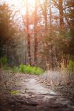 Walking Trail Path. Outdoor walking trail path in nature royalty free stock photography