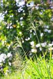 Outdoor wild grass Royalty Free Stock Photos