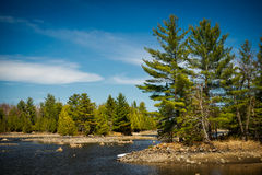 Outdoor Wilderness Lake Forest Landscape. The rocky shores of a Canadian lake in an Ontario wilderness evergreen forest Royalty Free Stock Photography