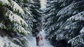 Aerial view of young wedding couple walking and having fun holding hands in snow weather pine forest during snowfall. Outdoor winter forest shot of young wedding stock video footage