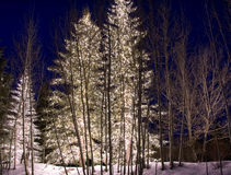 Free Outdoor Winter Lights 1 Stock Photography - 47022952