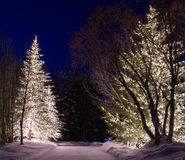 Outdoor Winter Lights 2 Royalty Free Stock Images