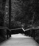 Outdoor wooden stair case in the woods. Black and white photo. royalty free stock images