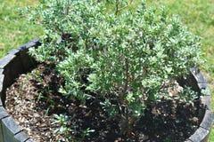 Outdoors комнатное растение Стоковые Изображения