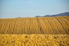 Outdoors холмов желтый сценарный небесно-голубой Стоковое Изображение RF