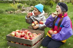Outdoors with apples Royalty Free Stock Photos
