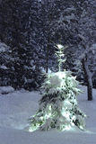 Outdoors Christmas tree in snowfall Royalty Free Stock Images