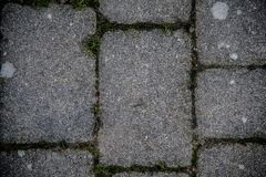 Outdoors Floor Tiles invaded by Nature. stock photos