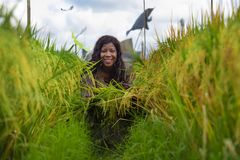 Outdoors fresh portrait of young beautiful and happy black afro American woman in cool dress having fun at tropical rice field. Enjoying exotic holidays trip in royalty free stock photos