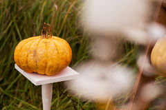 Outdoors halloween decor Stock Images