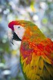 outdoors kolorowa papuga zdjęcia royalty free