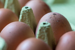 Outdoors laid chicken eggs. Some plain outdoor laid chicken eggs Royalty Free Stock Image