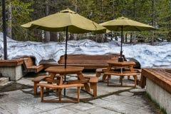 Outdoors lasowy cukierniany pokład z śniegiem na tle w sekwoja parku narodowym, usa - duża wysokość obraz royalty free