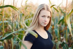 Outdoors lifestyle portrait of young adorable fresh looking redhead woman with freckles gorgeous extra long hair corn field sunny Royalty Free Stock Photography