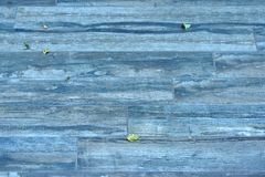 Outdoors Natural Blue Wooden Flooring in Autumn Stock Photo
