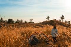 outdoors obozuje traw średniogórza halni w zmierzchu Obraz Royalty Free