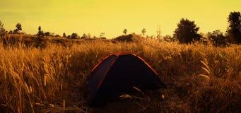 outdoors obozuje traw średniogórza halni w zmierzchu Obraz Stock
