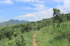 Outdoors path past tree in green field of grass in african nature, royal natal, south africa, beautiful landscape Royalty Free Stock Images
