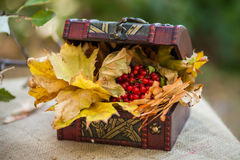 Outdoors picnic close up Stock Images