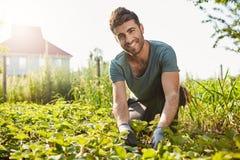 Outdoors portret dojrzały atrakcyjny młody rolnik ono uśmiecha się w błękitnej koszulce, podnoszący jagody od jego ogródu, patrze zdjęcie royalty free