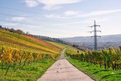 Outdoors Vineyard Landscape Fall Season Autumn Orange Yellow Gre Royalty Free Stock Image