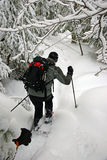 Outdoors in Winter. A snowshoe enthusiast in the forest with his dog after a snowfall in central Ontario Royalty Free Stock Photography