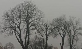Outemn drzewa Fotografia Stock