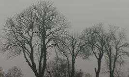Outemn trees Stock Photography
